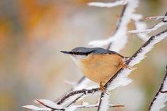 Börzsöny.org Nature Photos, Bird, Animals, Animales, Animaux, Birds, Animal, Animais