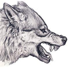 Wolf drawings, animal sketches, animal drawings, drawing tips, drawing refe Wolf Head Drawing, Sheep Drawing, Wolf Howling Drawing, Wolf Drawing Easy, Anime Wolf Drawing, Anime Art, Drawing Hair, Wolf Clipart, Animal Sketches