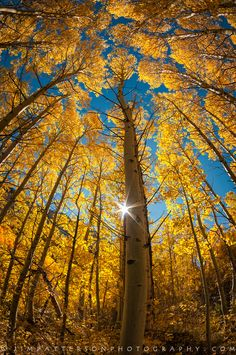 fall photography - Google Search