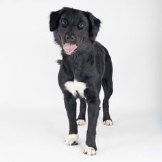 Shapers  is available for adoption at our Mission campus!