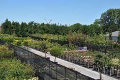 zeelandplant hoveniers afhaalcentrum