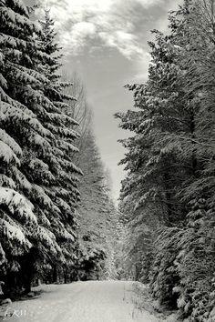 Norwegian Woods- © Kari Meijers
