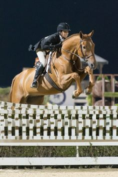 brunello - usef horse of the year
