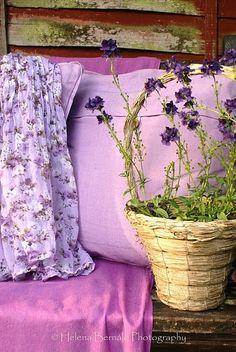 Lavender @Pascale Lemay De Groof