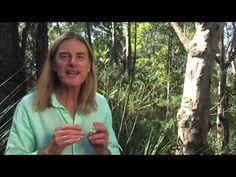 ▶ WARATAH Australian Bush Flower Essence - YouTube