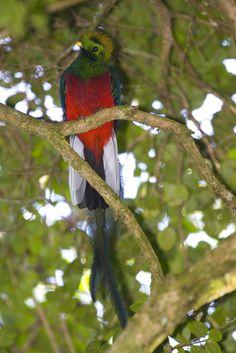 12 Most Amazing Exotic Birds - exotic birds, weird birds - Oddee Weird Birds, Rare Birds, Exotic Birds, Tropical Birds, Colorful Birds, Most Beautiful Animals, Beautiful Birds, Small Birds, Pet Birds