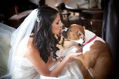 I will definitely have my Kayleah boxer to my wedding pictures Boxer And Baby, Boxer Love, Wedding Wishes, Wedding Pictures, I Love Dogs, Puppy Love, National Puppy Day, Boxer Puppies, Wedding Inspiration