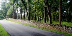 Stone fences around Lexington