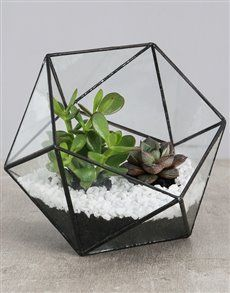 flowers: Succulent With White Stones in a Terrarium! White Stone, Indoor Plants, Terrarium, Planting Flowers, Succulents, Stones, Birthday, Home Decor, Inside Plants