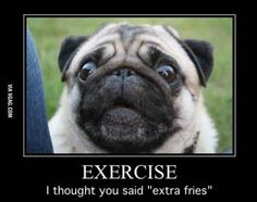 When pugs say what we're all thinking: Dog meme, Funny dog, Exercise Motivation, pug pic Funny Animal Memes, Dog Memes, Cute Funny Animals, Funny Cute, Funny Dogs, Funny Gym, Hilarious, Pug Pictures, Funny Animal Pictures