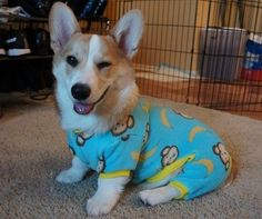 15 Sleepy Dogs Wearing Onesies Who Are Ready For Bed Funny Animal Pictures, Funny Animals, Cute Animals, Beautiful Dogs, Animals Beautiful, Sleepy Dogs, Best Dog Breeds, Smiling Dogs, Dog Wear