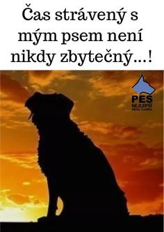 Dog Quotes, Humor, Texts, Motivation, Dogs, Animal Pictures, Fotografia, Quotes For Dogs, Humour