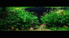 Want to improve the quality of your tanks? Click the link in our bio and sign up!  Gligorijevic Zoran