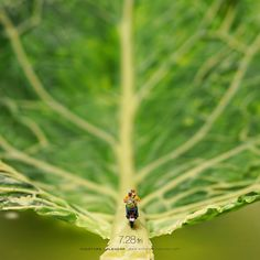 """Road of Leaf - """"About this slope, Omori is good!"""""""