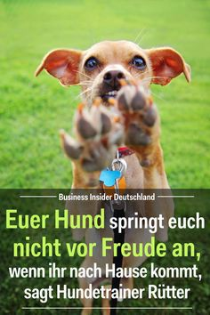 Your dog won't jump for joy when you come home, says dog trainer Rütter - Dogs' emotions are sometimes difficult to interpret. If your dog jumps at you, it does not nec - # art breeds cutest funny training bilder lustig welpen Pet Dogs, Dogs And Puppies, Dog Cat, Animals And Pets, Funny Animals, Funny Dogs, Animals Tattoo, Top 10 Dog Breeds, Dog Corner