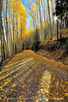 Yellow pops of color along Waterline Road, Flagstaff, Arizona | #trees #TreePhotos
