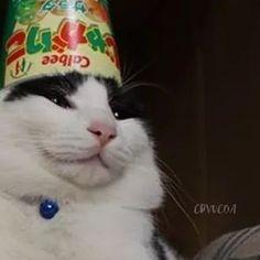 ೀ》 ɪᴄᴏɴ' s ᴘᴀʀᴀ ᴄᴏᴍᴘᴀʀᴛɪʀ 《ೀ - 🌙 - Wattpad Cat Profile, Cats Tumblr, Cat Icon, Matching Profile Pictures, Owning A Cat, Cat Aesthetic, Cat Logo, Grey Cats, Cat Facts