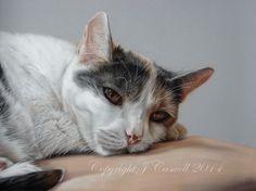 Pastel Pet Portraits - Home Page