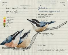 Fran Giffard: Illustrations on Moleskin Pages