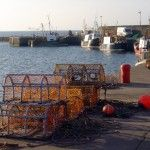 Lobstermen Fall Victim to Supply and Demand