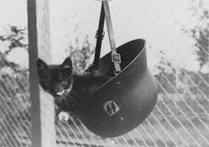 Black and white kitten in Waffen-SS helmet War Dogs, German Soldiers Ww2, German Army, Chat Web, German Helmet, Military Working Dogs, Military History, World War Two, Historical Photos