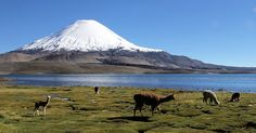 paisajes de chile - Buscar con Google Chile, Patagonia, Fauna, Mount Rainier, Natural, Mountains, Landscape, Travel, Grande