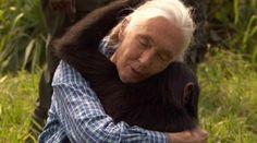 Goodall, still loving the chimps.