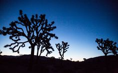 On a sauna-hot afternoon in Yucca Valley, a town 12 miles west of Joshua Tree National Park, Ryan Schneider, a painter from Brooklyn and a recent transplant to the area, was standing in the...