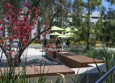 With over 40 years of experience, LRM is one of Southern California's most experienced and established landscape architectural and urban design practices. Mixed Use, Outdoor Seating, Urban Design, Apollo, Commercial, California, Landscape, Architecture, Arquitetura