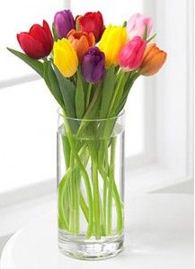 Fresh Tulips in Cylinder Vase