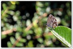 La mariposa que contemplaba el bokeh de su jardín