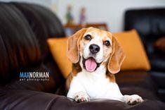 Beagle!