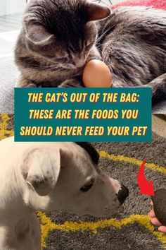 #Cat #Out #Bag #Foods #Should #Never #Feed #Pet Kittens Cutest, Cute Cats, Rainbow Nail Art, Stylist Tattoos, Glitter Eye Makeup, Coffin Shape Nails, Baby Dogs, Medium Hair Styles, Cute Puppies
