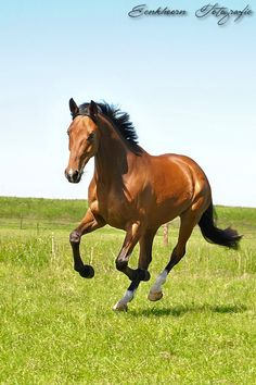 Cute Horse Pictures, Horse Photos, Cute Horses, Pretty Horses, Beautiful Creatures, Animals Beautiful, Guardian Angel Pictures, Animals And Pets, Cute Animals