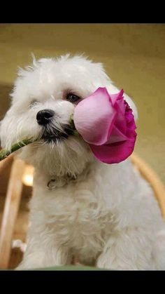 Lovable Baby Animals You Just Want to Cuddle Up With! Love My Dog, Cute Puppies, Cute Dogs, Dogs And Puppies, Doggies, Baby Dogs, Animals And Pets, Baby Animals, Cute Animals