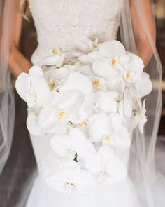 White cascading Phalaenopsis orchids for this #bridalbouquet Flowers by @eliana_nunes_floral_design #WCvendor • • • Photography by @cathydurig #weddingday #weddingflowers #bridalbouquets #weddingflorist #weddingphotographer #northcarolina #eliananunesfloraldesign #cathydurig #weddingchicks #weddingday #whitebouquet #orchids