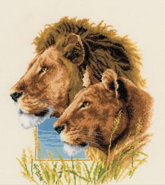 This stunning cross stitch kit is the perfect project for any big cat lover.  The incredible design features a pair of majestic lions against a backdrop of cream and blue, with African grass in the foreground.