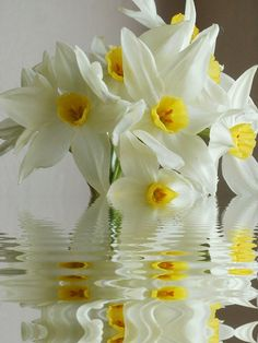 Narcissus reflection by ☼ Eleonora Eli ☼~~ Amazing Flowers, Love Flowers, Colorful Flowers, Spring Flowers, Flower Background Wallpaper, Flower Backgrounds, Narcissus Flower, Calla, Daisy