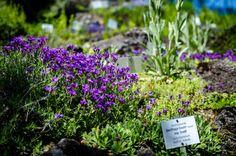 Der Botanische Garten Wien: eine Oase mitten in der Großstadt Herbs, Plants, Hibiscus, City, Botanical Gardens, Nature, Flowers, Tips, Lawn And Garden