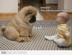 10 Funniest Dog Pictures Ever Taken animals adorable dog animal pets puppies funny animals heartwarming funny dogs Baby Animals, Funny Animals, Cute Animals, Animal Babies, Panda Dog, Dog Cat, Pet Cats, Cute Puppies, Cute Dogs