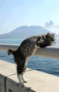 Cat on Vacation.. :)