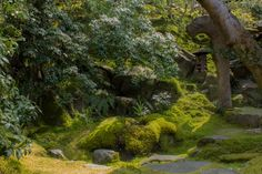 A small moss garden in front of the tea house of the Ruriko-in Villa (瑠璃光院) in Yase, Kyoto!