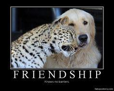 Friendship - Demotivational Poster