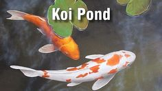 How to Build a Koi Fish Pond. Koi are beautiful, ornamental fish that can live for a long time in the right conditions. Building your own koi fish pond in your garden can sound like a difficult task, however, with a bit of planning and. Coy Fish, Koi Fish Pond, Fish Ponds, Koi Art, Fish Art, Koi Kunst, Koi Painting, Online Art Classes, Guache