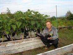Игорь Лядов и его грядки