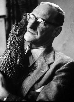 Cuddly Gator  Vintage Photographs Of Exotic Pets