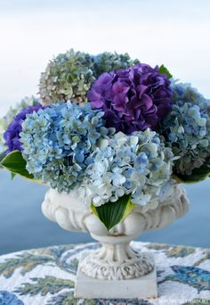 hydrangea garden care Dockside Dining with Butterfli. hydrangea garden care Dockside Dining with Butterflies and Hydrangeas - Hydrangea Garden, Garden Urns, Hydrangea Flower, Flowers Garden, Hyacinth Flowers, White Flowers, Beautiful Flowers, Simple Flowers, Simply Beautiful