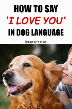 Dogs and humans don't speak the same language but you can still tell your dog you love him. Here are 11 ways to tell a dog you love them in their own language. Dog Breeds Little, Best Dog Breeds, Meds For Dogs, Organic Dog Food, Dog Body Language, Dog Grooming Shop, Cool Dog Houses, Dog Information, Dog Diapers