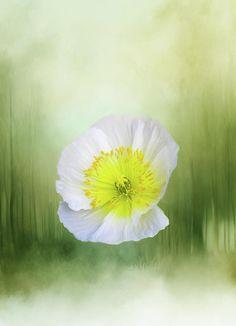 """Forest Flower# by Terry Davis #Poppy #DigitalArt #White #Green #Texture #Abstract +TerryIKON"
