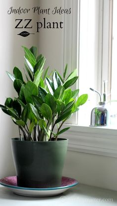 The ZZ Plant- An easy indoor plant - http://livedan330.com/2016/01/09/indoor-plant-ideas-zz-plant/